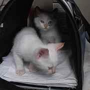 Nagi-chan &Kitten's