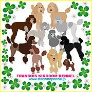 フランソワ王国■Sプードル