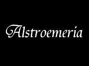【Alstroemeria】