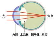 視能訓練士の活躍の場