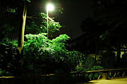 八王子の夜の公園を散歩し隊!