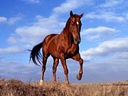 当て馬キャラが好き♡