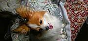 滋賀県愛犬クラブ