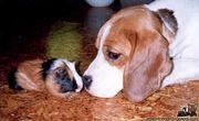 動物から学ぶ素直な生き方