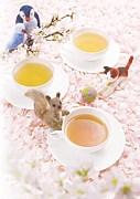 紅茶専門店を開きたい!!