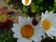 お花と動物に囲まれて・・・
