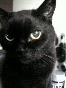 幸運を呼ぶ黒猫