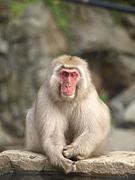 猿の会 [ボードゲームサークル]