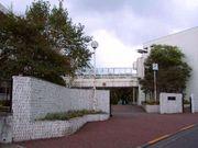 羽村第一中学校 〜マロニエ〜