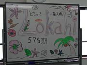 Lokahi(ローカヒ) 575