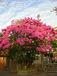 なはのはな 沖縄なんぶ樹花散歩