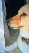 犬猫殺処分ゼロを目指す集い