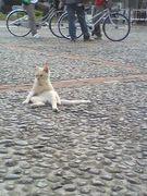 中部のネコをつい追っかける人