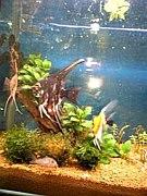 熱帯魚部 魚人伝説