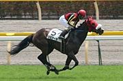 最強牝馬 リビアーモ