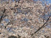 2006 お花見(*^^*)