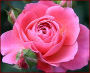 名古屋の花好き集合〜♡