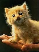 ★愛するべきは猫☆