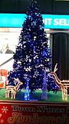 クリスマスツリーを見て楽しむ