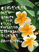 つぶやき川柳・俳句¢(^∀^)