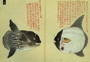 江戸の博物誌