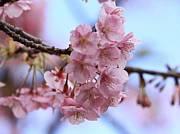 高校3桜☆小平組