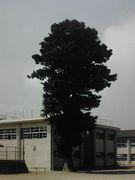 松阪市立第一小学校