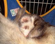 動物達の寝顔