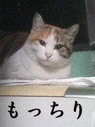猫はもっちり派