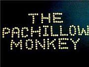 THE PACHILLOW MONKEY