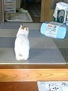 猫の後ろ姿が好き♪