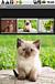 写真集アプリ用、モデル写真募集