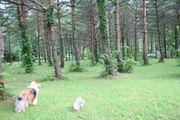 Dog & Outdoor