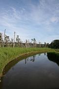 根室 温根沼林道 夢層平を探検