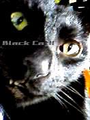 黒猫と円卓の猫たち