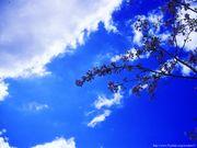 空のむこうには・・・・