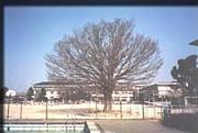 六栄小学校