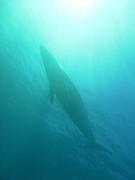 オーストラリアのダイビング