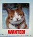この猫の飼い主は誰?