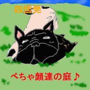 四国★☆鼻ぺちゃ犬っ☆★