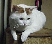 神様猫(ギー`・ω・´モン)
