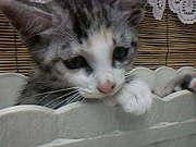 ウチの猫ちゃん宇宙一可愛いっ!