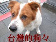 台湾のお犬様