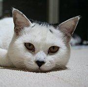 野良猫中継「佐藤の部屋」