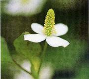 植物の力〜自然・美・健康〜