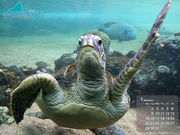 熱帯魚の相談室