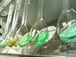 東海大学 Sea Food Lab
