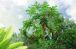 観葉植物の彩り
