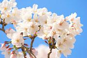 京大大学生と日本の歴史を語ろう