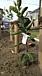 岐阜で家庭菜園 DIY箱庭